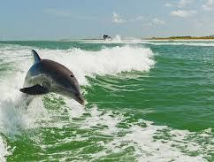CD HI dolphin